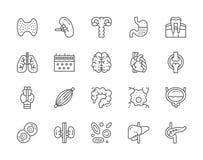 Ajuste dos órgãos humanos alinham ícones Baço, estômago, pulmões, cérebro, coração e mais ilustração do vetor