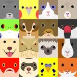 Ajuste dos animais de animal de estimação bonitos enfrentam no quadrado ilustração royalty free