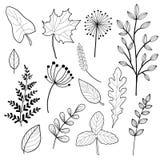 Ajuste dos esboços da Botânica e da linha garatujas ilustração do vetor