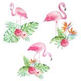 Ajuste dos flamingos da aquarela com flores tropicais ilustração do vetor