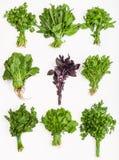 Ajuste dos grupos de ervas frescas do verde do corte Foto de Stock Royalty Free