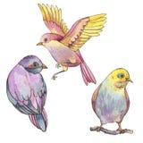 Ajuste dos pássaros coloridos das aquarelas isolados no fundo branco ilustração do vetor