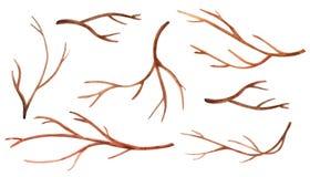 Ajuste dos ramos de árvore da aquarela ilustração royalty free