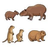 Ajuste #2 dos roedores - ilustração do vetor ilustração do vetor