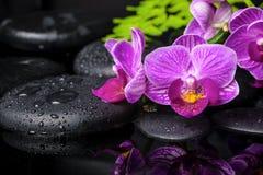 Ajuste dos termas da orquídea lilás descascada (phalaenopsis), ramo Fotos de Stock