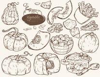 Ajuste dos vegetais das ilustrações - abóbora ilustração stock