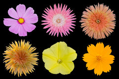 Ajuste flores Imagem de Stock Royalty Free