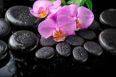 Ajuste hermoso del balneario de la flor floreciente de la orquídea de la lila de la ramita, gree Fotografía de archivo libre de regalías