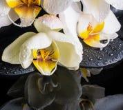 Ajuste hermoso del balneario de la orquídea blanca (phalaenopsis) Foto de archivo