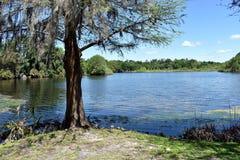 Ajuste id?lico del libro de la historia del ?rbol que pasa por alto un lago cerca de la universidad de la Florida en Gainesville, fotos de archivo libres de regalías