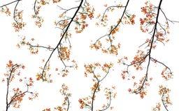 Ajuste o ramo de árvore Foto de Stock