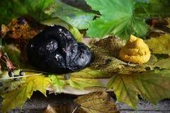 Ajuste preto do Dia das Bruxas do pretzel e do hummus, prato scarry Imagem de Stock Royalty Free