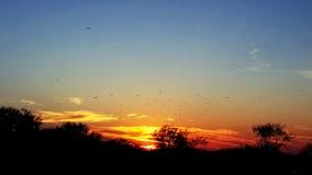 Ajuste Sun com as gaivota no céu fotos de stock