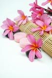 Ajuste tropical del balneario con Plumeria rosado en el fondo blanco Imagenes de archivo
