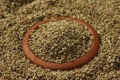 Ajwine ou as sementes do Carom são uma especiaria rara usada flavouring Imagens de Stock Royalty Free