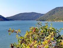 Akacian förgrena sig mot den blåa sjön Abrau och berget closeup Abrau-Durso Novorossiysk, Black Sea, Ryssland Arkivbilder