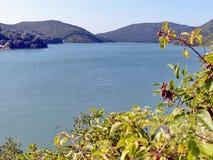 Akacian förgrena sig mot den blåa sjön Abrau och berget closeup Abrau-Durso Novorossiysk, Black Sea, Ryssland Arkivbild