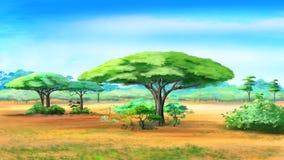 Akaciaträd i afrikansk buske Royaltyfria Foton