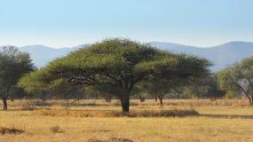 akacja krajobraz fotografia stock