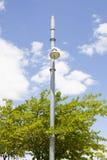 Akacja za lamppost zdjęcia royalty free