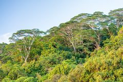 Akacjowi drzewa przy zmierzchem, Afryka Zdjęcie Royalty Free