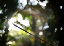 akacjowi zielone liście tło Fotografia Royalty Free
