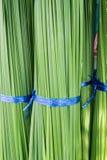 akacjowi zielone liście tło Fotografia Stock