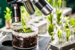 Akademiskt laboratorium som undersöker nya metoder av växtavel Arkivfoton