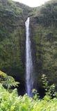 Akaka瀑布-大岛,夏威夷 免版税库存图片