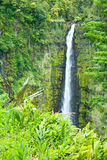 Akaka cae en la isla grande de Hawaii en delanteras tropicales de una lluvia Foto de archivo