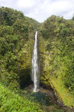 Akaka Fall Royalty Free Stock Images