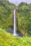 Akaka faller vattenfallet i Hawaii Arkivfoto