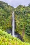 Akaka faller vattenfallet i Hawaii Royaltyfria Bilder