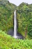 Akaka faller vattenfallet i Hawaii Arkivfoton