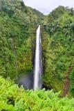 Akaka faller vattenfallet i Hawaii Arkivbilder