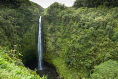 Akaka Falls. Huge waterfall over 400 feet in height on the Big Island Of Hawaii Royalty Free Stock Images