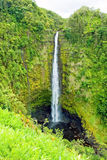Akaka Falls on the Big Island of Hawaii in a tropical rain fores Royalty Free Stock Images