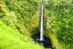Akaka Falls on the Big Island of Hawaii in a tropical rain fores Stock Photography