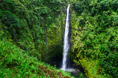 Akaka falls. Close to Hilo, Big Island, Hawaii Royalty Free Stock Image