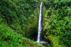 Akaka falls Royalty Free Stock Image