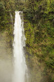 Akaka Falls frozen Royalty Free Stock Photos