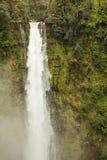 Akaka Falls frozen Royalty Free Stock Photos