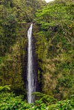 Akaka Falls. 'Akaka falls has a free-fall plunge of 420 feet. Located north of Hilo on Hawaii's big isalnd Royalty Free Stock Images