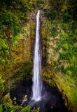 Akaka Falls Stock Photography