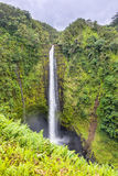 Akaka Falls waterfall in Hawaii Royalty Free Stock Images