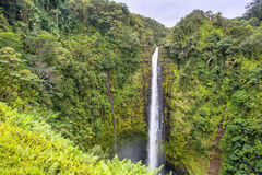 Akaka Falls waterfall in Hawaii Royalty Free Stock Image