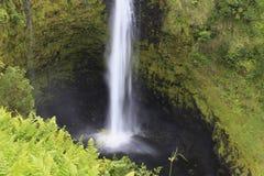 akaka falls wielka Hawaii wyspa Obraz Royalty Free