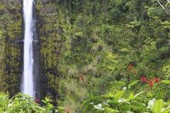 akaka falls wielka Hawaii wyspa Fotografia Stock