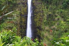 akaka falls wielka Hawaii wyspa Zdjęcia Stock
