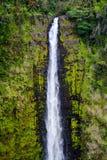 Akaka majestoso cai cachoeira situada no córrego de Kolekole na ilha grande de Havaí Imagens de Stock
